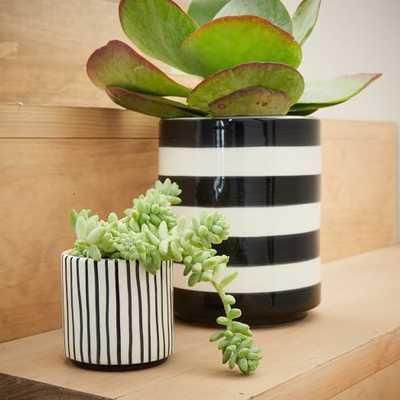 """Striped Cache Pots - 3.5"""" - West Elm"""