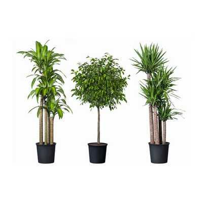 "TROPISK Potted plant-12 "" - Ikea"