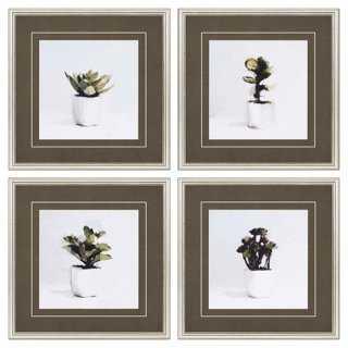 Sayilir, Succulents Pk/4 - Framed - One Kings Lane