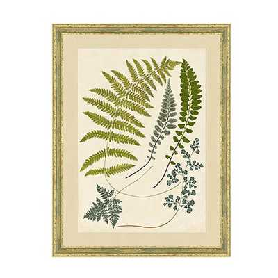 Graceful Fern Art 23x19 framed - Ballard Designs