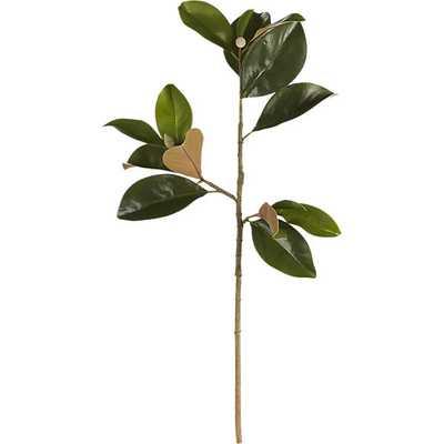 Magnolia stem - CB2