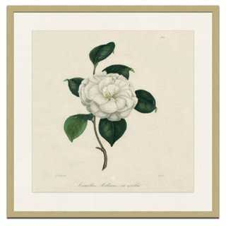 Camellia II - One Kings Lane