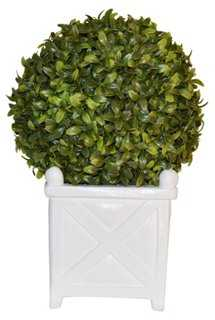 """13"""" Boxwood Ball in Planter, Faux - One Kings Lane"""