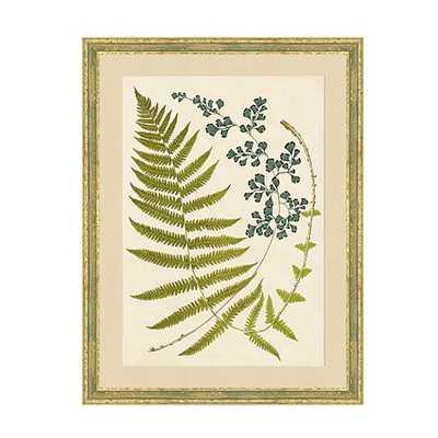 Graceful Fern Art - Print 3 - Ballard Designs