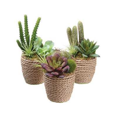 3 Piece Succulent Finley Garden Desk Top Plant Set in Container - Wayfair