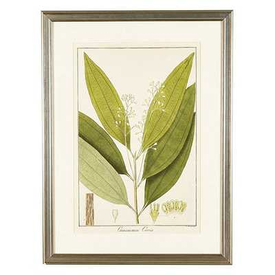 "Heines Leaf Art - Print II -21""x16""-Framed - Ballard Designs"