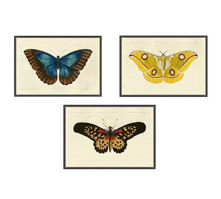 Naturalist Moths SET OF 3 - Pottery Barn