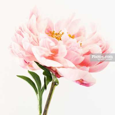 Close up of pink flower - Framed - Photos.com by Getty Images
