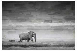 Elephant - One Kings Lane