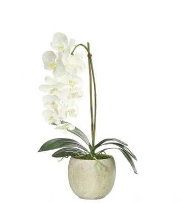 Orchid Phalaenopsis, White Round Pot - Domino