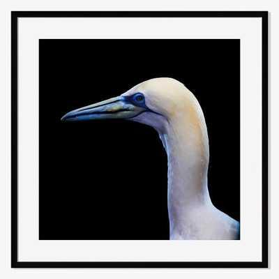 Northern Gannet by Bob Croslin-Framed-Small (Mat) - West Elm
