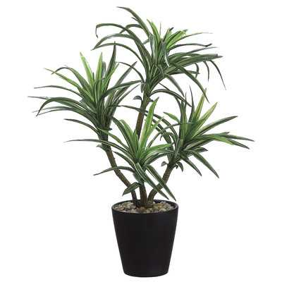 Dracena Desk Top Plant in Pot - Wayfair