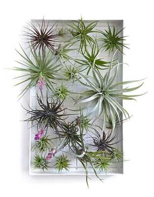 Airplant Frame Vertical Garden White- Large - Domino