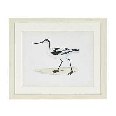 Morris Seabird Whitewash Art - Print IV, 19x23, Framed - Ballard Designs