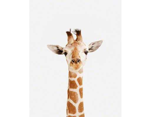 "BABY GIRAFFE LITTLE DARLING- 8.5"" x 11""- Print Only - shop.com"