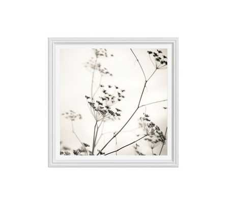 "Nature's Drawing Framed Print - 25"" x 25"" - Framed - Pottery Barn"