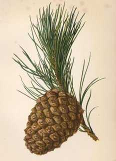 Stone Pine Cone, 1898 - One Kings Lane