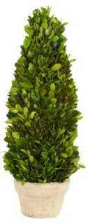 Boxwood Cone Topiary, Preserved - One Kings Lane