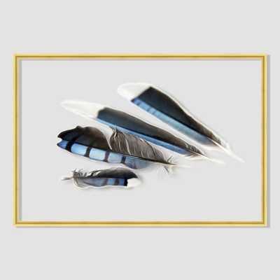 "Still Acrylic Wall Art - Blue Jay Feathers -  24""w x 16""h.- Framed - West Elm"