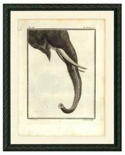 Elephant Trunk, 1780s - One Kings Lane