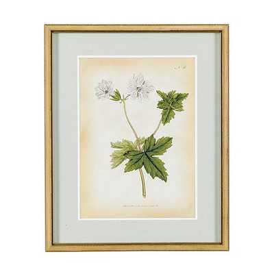 Curtis Botanical Framed Print VIII -21x17 - Framed - Ballard Designs