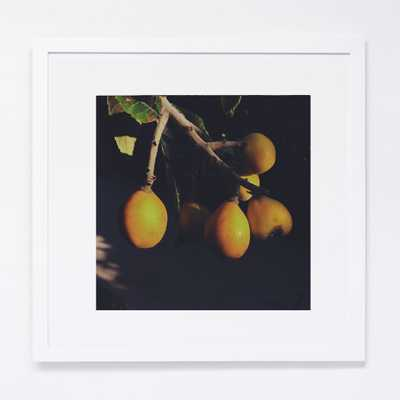 """ONCE, I PROMISED YOU A PIE  PHOTOGRAPHY-12""""X12""""-WHITE MATTED FRAME - Tappan Collective"""