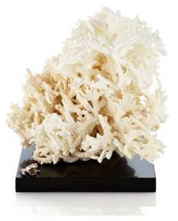 White Fire Coral on Marble & SS Base - One Kings Lane