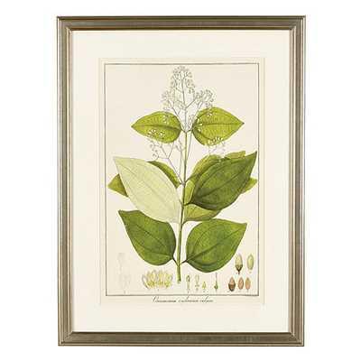 "Heines Leaf Art - Print I -21"" x 16""-Framed - Ballard Designs"