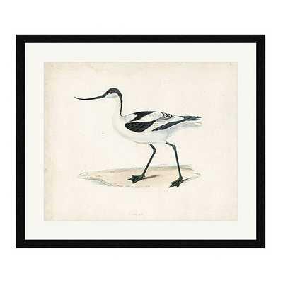 Morris Seabird Black Framed Art - Print IV - Ballard Designs