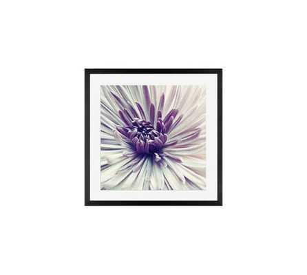 Purple Star Framed Print by Lupen Grainne - Pottery Barn