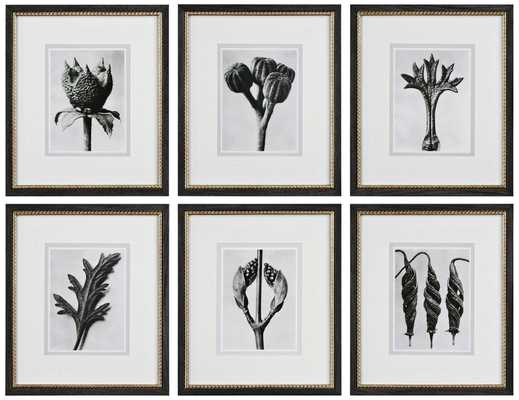 "Botany Specimens 6-Piece 20 1/2"" High Frame Wall Art Set - Lamps Plus"