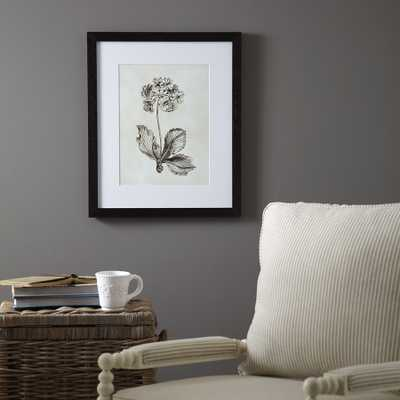 "Botany Framed Print II - 24"" H x 20"" W - Birch Lane"