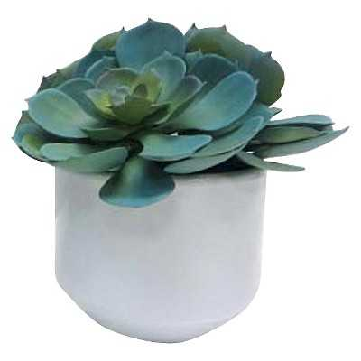 "Thresholdâ""¢ 7"" Succulent in Ceramic Pot - Target"