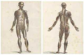 Human Musculature, 1825, Pair - One Kings Lane