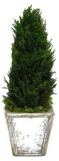 """12"""" Topiary Cone in Planter, Preserved - One Kings Lane"""