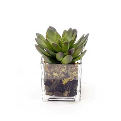 Decorative Glass Succulents with Pebbles - AllModern