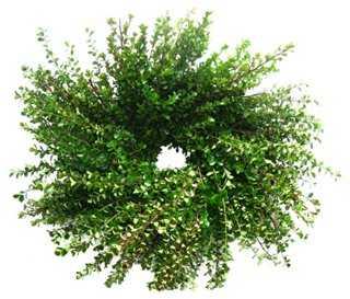Boxwood Wreath, Dried - One Kings Lane