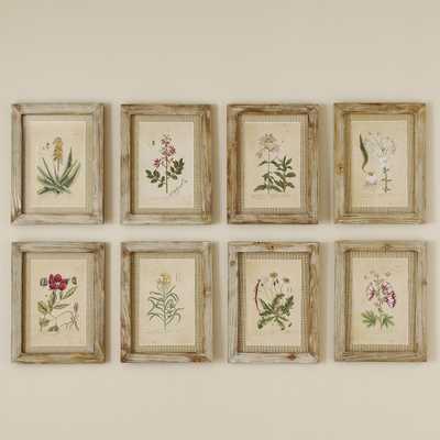 Secret Garden Framed Prints - 15.5x11.75 - Birch Lane