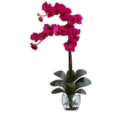 Double Phalaenopsis Orchid in Vase - Beauty - Wayfair