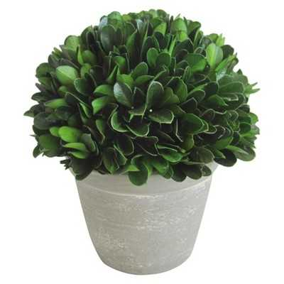 "Boxwood Topiary in Pot - 6"" - Target"