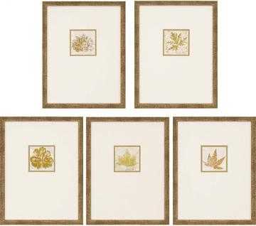 MORPHOLOGIES FRAMED WALL ART - SET OF 5 - Home Decorators