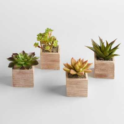 Mini Succulent Pots, Set of 4 - World Market/Cost Plus