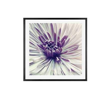 """Purple Star Framed Print by Lupen Grainne - 25"""" x 25"""" - Pottery Barn"""