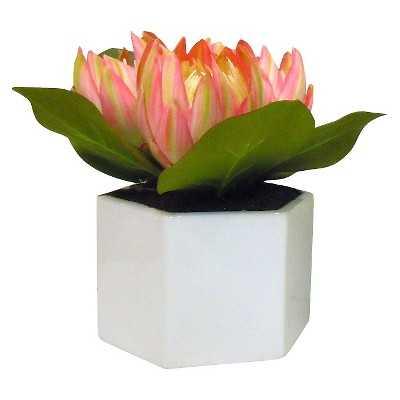 "Thresholdâ""¢ 10"" Protea in Pot - Target"