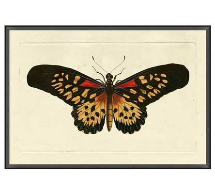 Naturalist Moths, Print 1, Blue - Pottery Barn