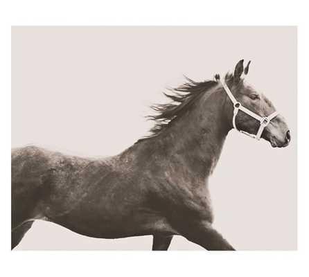 Vintage Horse Framed Print - Pottery Barn