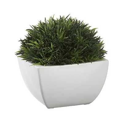 Potted Artificial Moss - Crate and Barrel