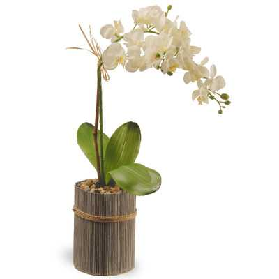 Potted Orchid - Wayfair