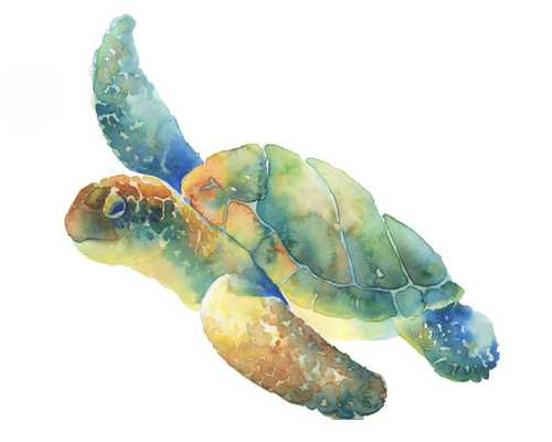 Sea Turtle print of my original watercolor painting, unframed - Etsy