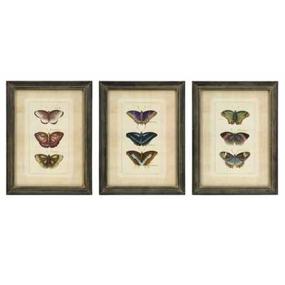 Butterfly Collection Wall Art - Set of 3 - Mercer Collection